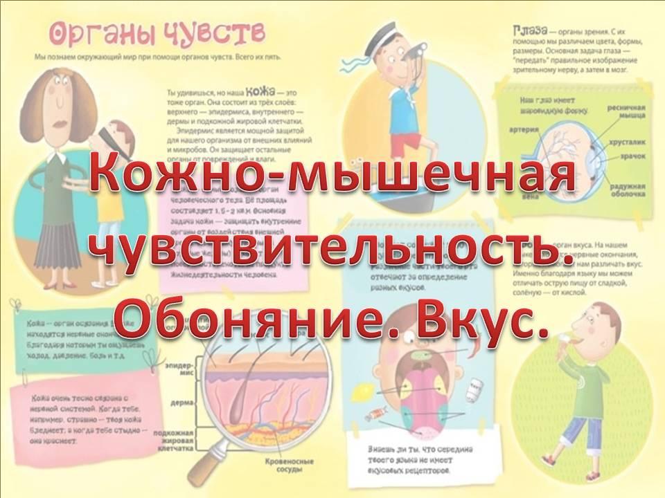 зависимость кальяна? кожно-мышечная чувствительность обоняние вкус конспект урока посуточно Новосибирске: проспект