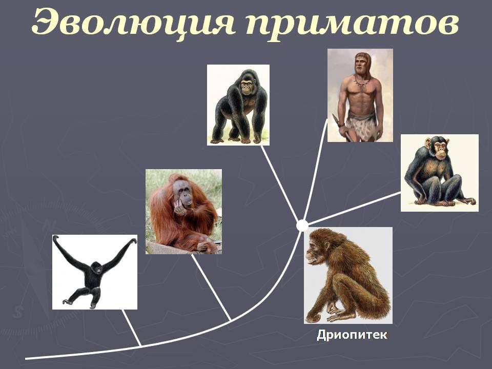 Эволюция биология презентация