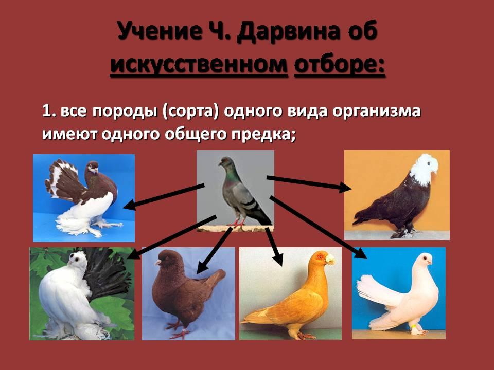 evolyutsionnoe-uchenie-charlza-darvina-prezentatsiya
