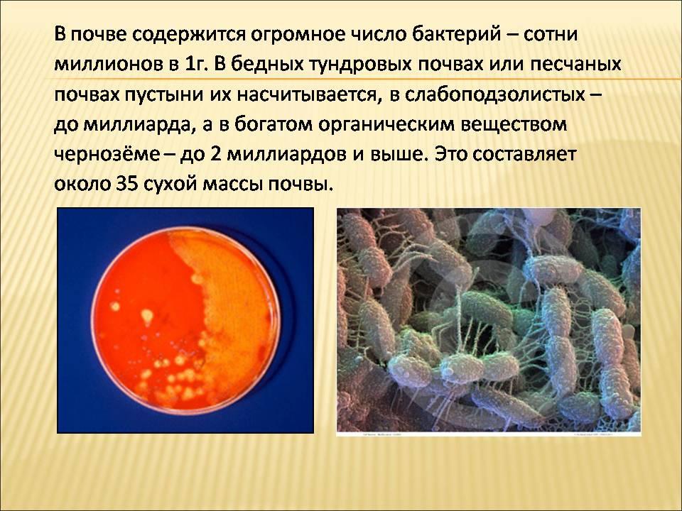 Реферат На Тему Роль Бактерий В Природе И Жизни Человека  В на тему природе роль и бактерий реферат человека жизни