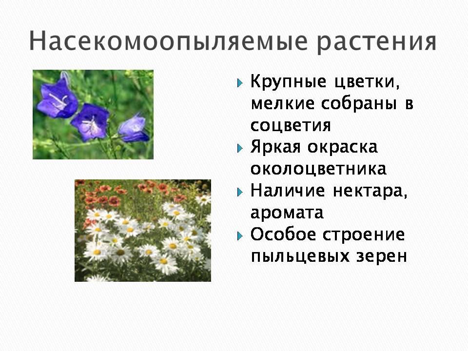 Презентация опыление растений