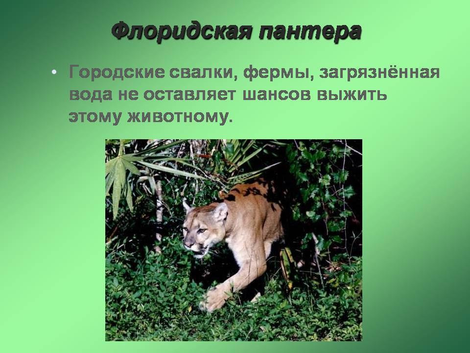Красная книга животные фото скачать
