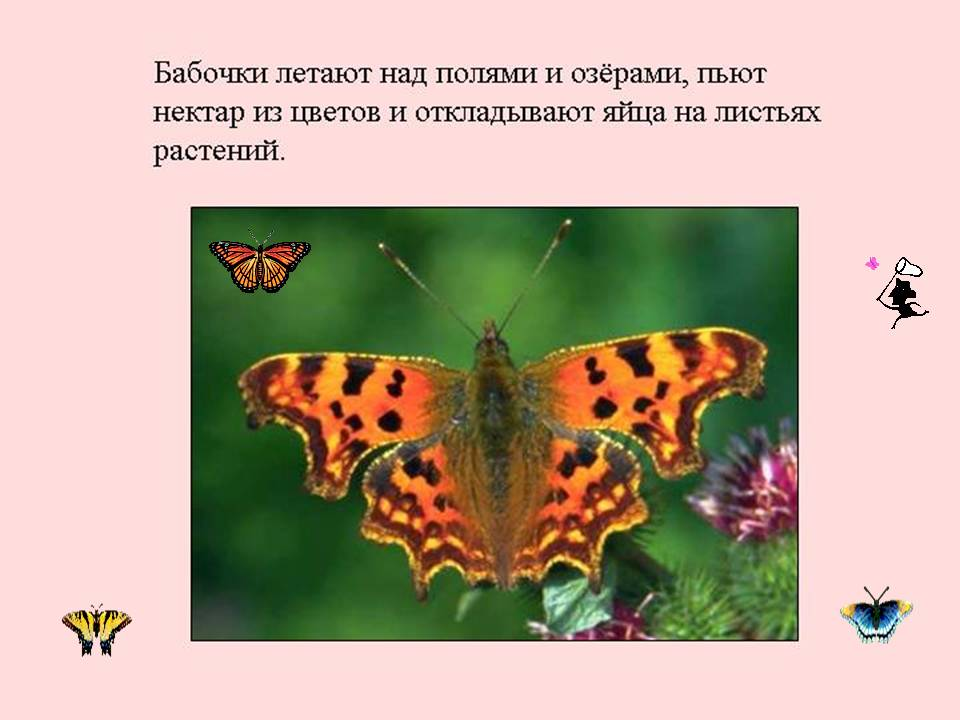 Бабочка И Цветы Читать Онлайн