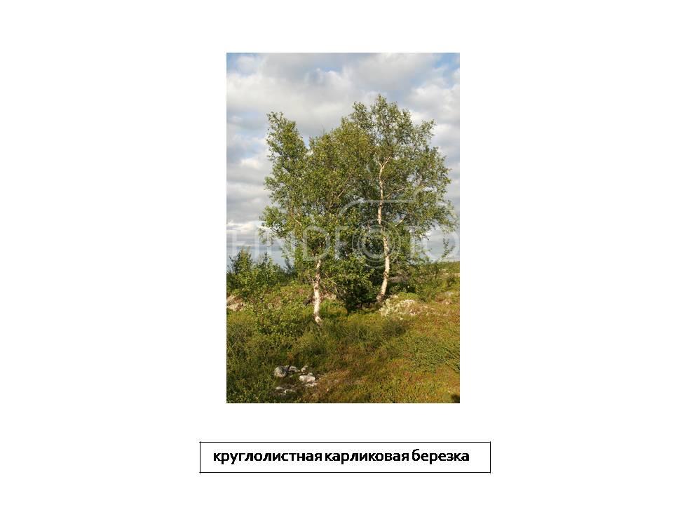 Презентация Экология Казахстана