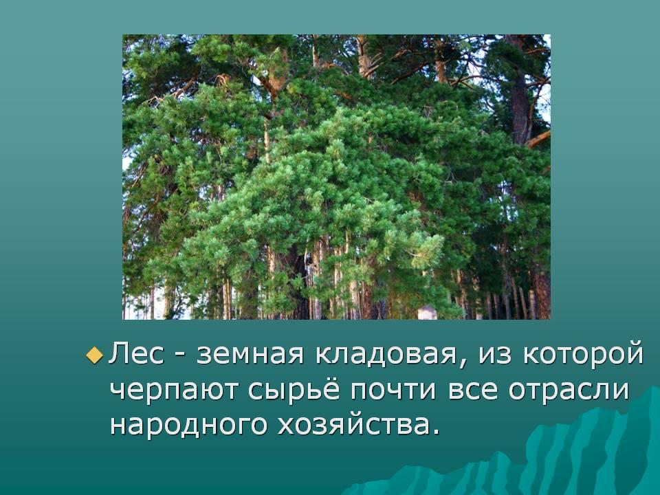 берегут лес: