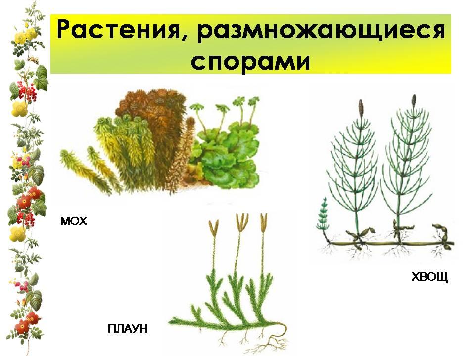Части растений картинки схема фото 789