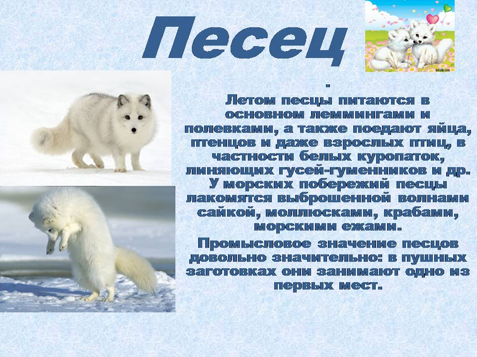 презентацию по окружающему миру животные арктики