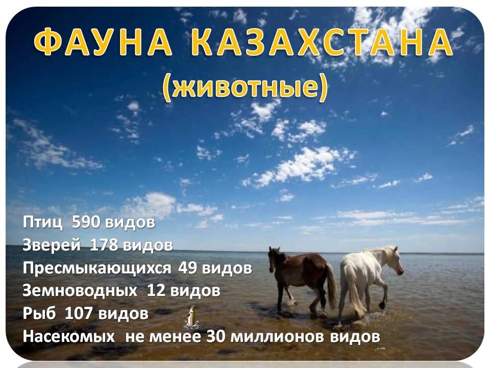 Картинки природа и животные казахстана