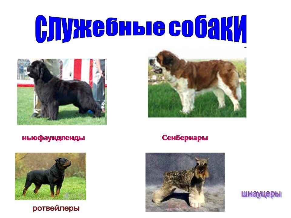 Презентация про собаку