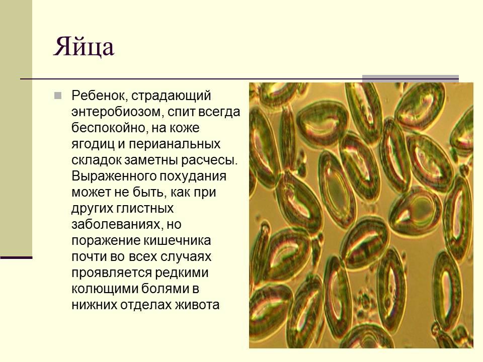 химия от паразитах