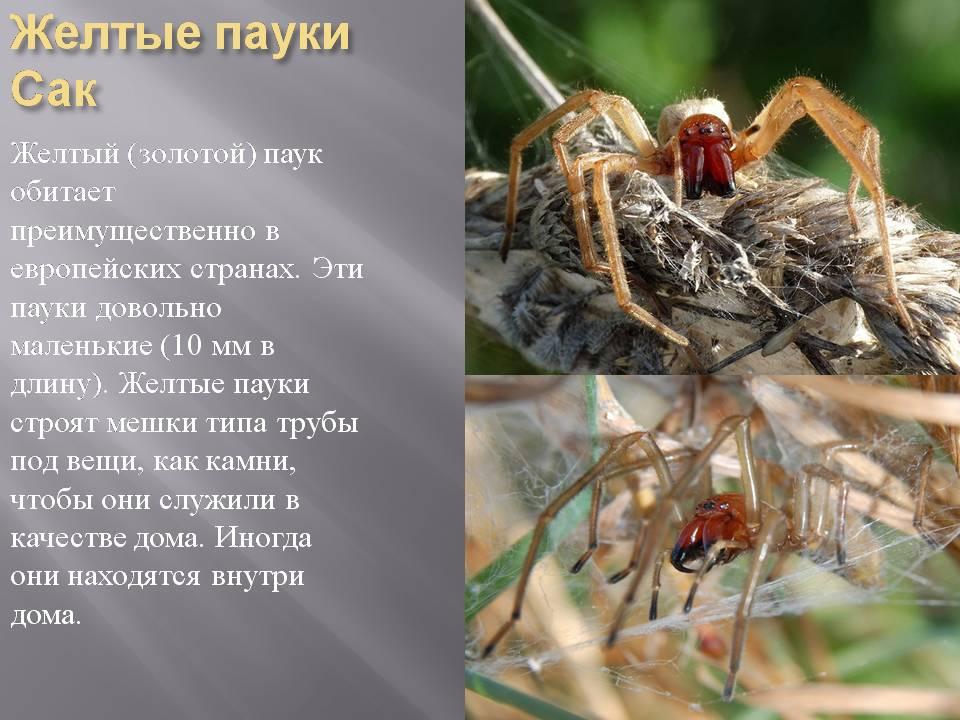 Доклад по биологии 7 класс про пауков