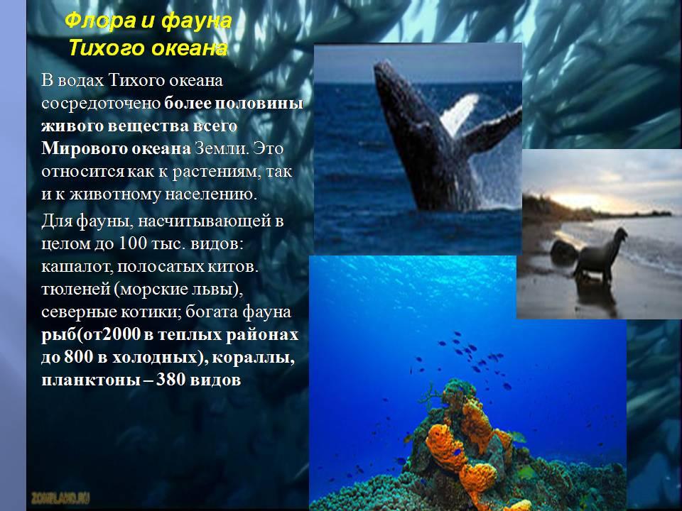 Тихий океана презентация