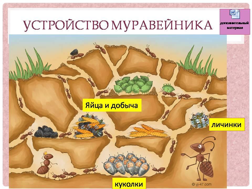 Общественные насекомые презентация 7 класс
