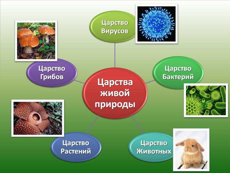 Царств отличаются друг от друга строением и особенностями жизнедеятельности царство растения царство животные