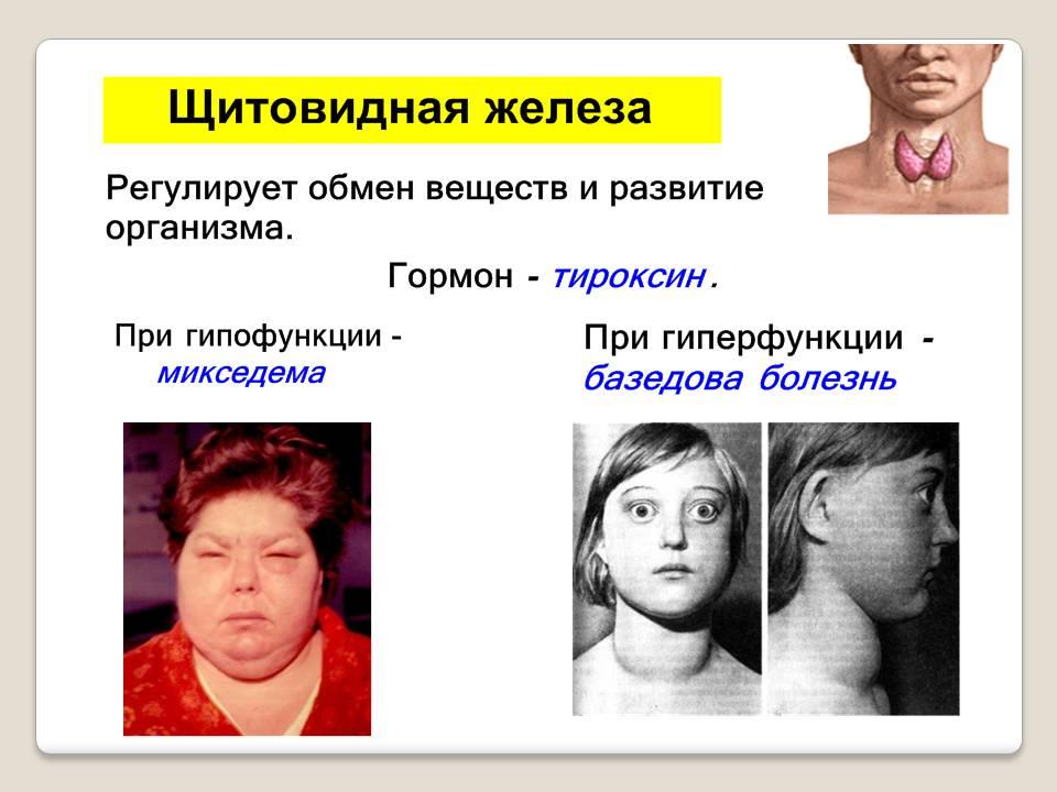 Эндокринная на презентация тему система человека