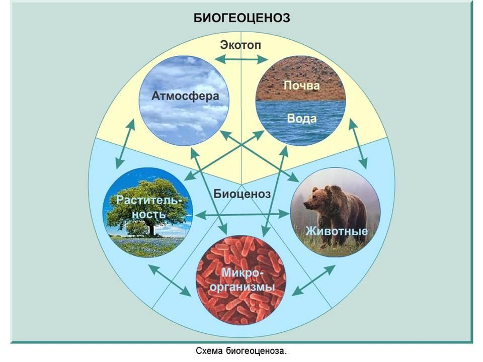 4) микроэволюция - это: а) эволюция микроорганизмов б) эволюция биоценозов в)