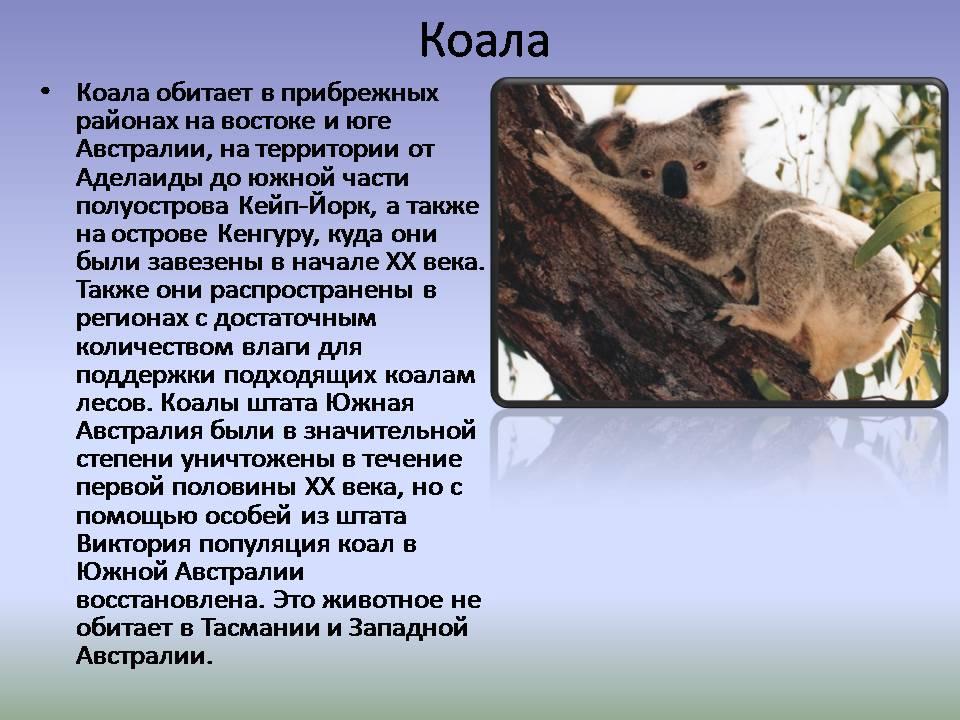 Презентация природные зоны австралии