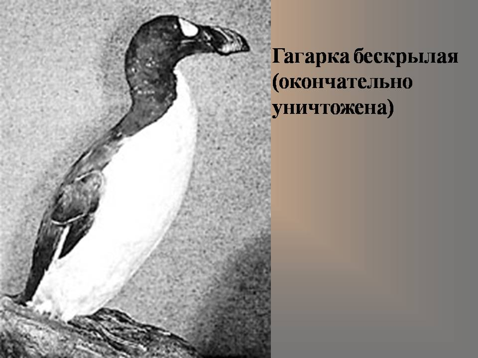 Бескрылые птицы 6 серия на русском языке