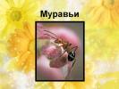 Муравьи (2 класс)