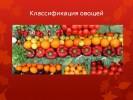 Классификация овощей (5 класс)