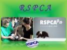 Экологическая организация RSPCA