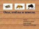 Осы, пчёлы и шмели