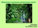 Животные и растения тропических лесов (2 класс)