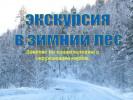 Экскурсия в зимний лес