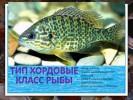 Тип хордовые класс рыбы