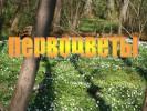 Первоцветы (1 класс)