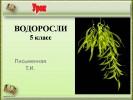 Водоросли (5 класс)