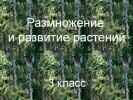 Размножение и развитие растений (3 класс)