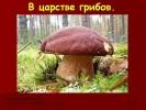 В царстве грибов (3 класс)