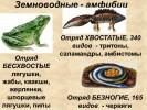 Земноводные - амфибии
