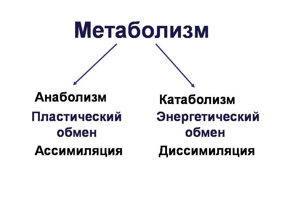 Partes del metabolismo
