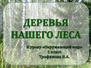 Деревья нашего леса (1 класс)