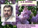 А.И. Куприн «Куст сирени»