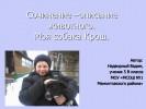 Сочинение – описание животного. Моя собака Крош