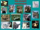 Как живут животные