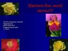 Цветок для мамы